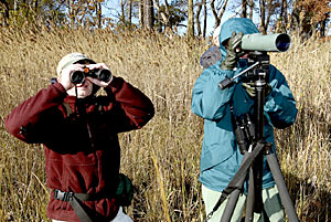 Bird watching at Eastern Neck Wildlife Preserve